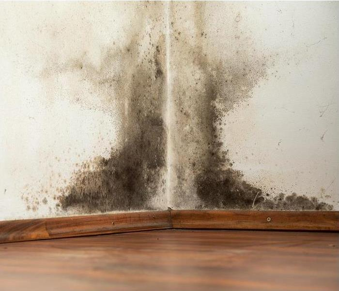 Mold Remediation Got Mold? Found Help!