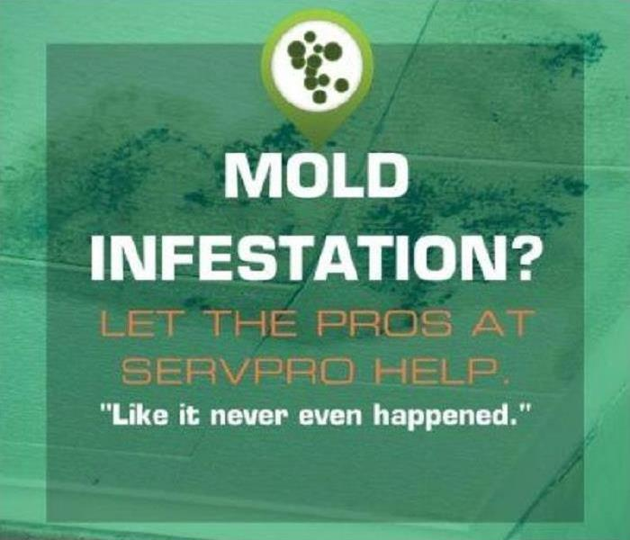 Mold Remediation Mold Infestation?  We Can Help!