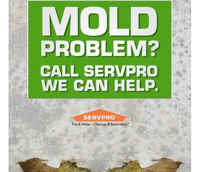 Mold Remediation Mold Removal and Remediation in your Home or Business