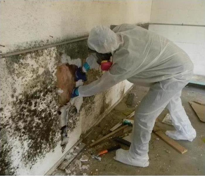Commercial Mold Remediation to a Commercial Building